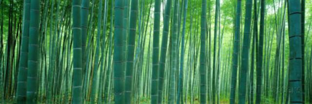 rdeco_bamboo