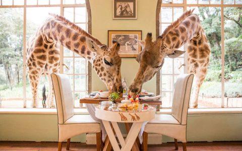 rdeco_giraffes-manor-house