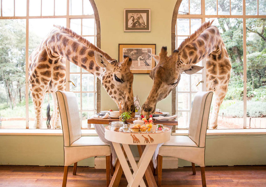 rdeco_giraffes-manor-house