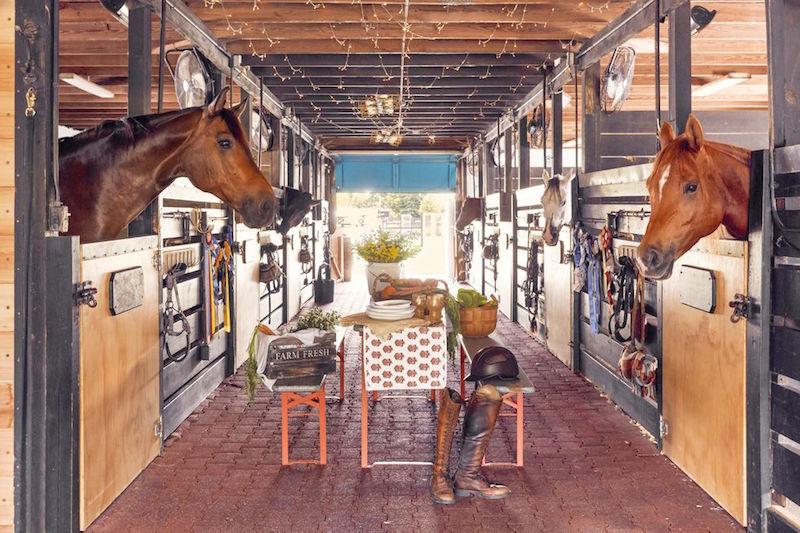 blue stallion farm florida stable